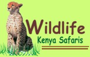 Wildlife Kenya Safaris